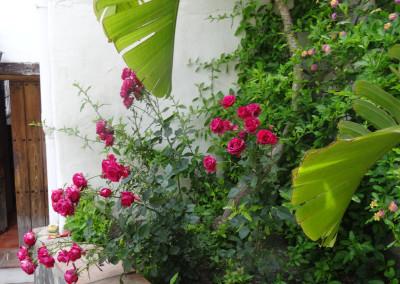 flowers in torrox